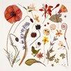 Magnolia Box Poster Hannah's Poppy, Kunstdruck von Rachel Pedder-Smith