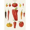 Magnolia Box Capsicums, or Chilli Peppers by Ernst Benary Graphic Art