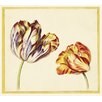 Magnolia Box Tulips by Simon Verelst Framed Art Print