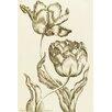 Magnolia Box Double Oriflamme - Tulipa Gesneriana Multiplex by John Hill Framed Art Print