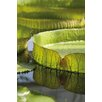 Magnolia Box Victoria Amazonica. Giant Amazonian Waterlily by Andrew McRobb Photographic Print on Canvas