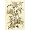 Magnolia Box Imperial - Gloriosa Superba by John Hill Art Print