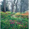 Magnolia Box Beautiful Drifts Of Tulips Stretch Into The Distance Along The Tulip Walk At Mainau, Lake Constance by Clive Nichols Photographic Print