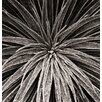 Magnolia Box Gerahmter Fotodruck Black and White Close Up Toned Image Of Echium Wilpretii von Clive Nichols