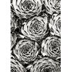 Magnolia Box Black and White Toned Image of Sempervivum Collecteur Anchisi. Succulent, Green, Pattern by Clive Nichols Photographic Print