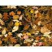 Magnolia Box Gerahmter Fotodruck Fall Leaves In Water, Vermont, Usa von Clive Nichols
