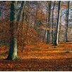 Magnolia Box Beechwoods Near Wallingford, Oxfordshire, Gb by Clive Nichols Photographic Print on Canvas