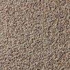 """Berkshire Flooring Global Residential Zen 22"""" x 22"""" Carpet Tile"""