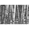 Andrew Lee 'Gold Black and White Bamboo' Graphic Art Wrapped on Canvas