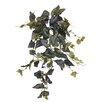 Rosalind Wheeler Begonia Hanging Plant