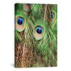 World Menagerie Shake Your Tailfeather II Photographic Print on Wrapped Canvas