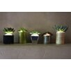 The Firefly Garden 5 Piece Artificial Succulents Desk Top Plant in Decorative Vase Set