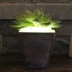 The Firefly Garden Artificial Flocked Agave Succulent Desk Top Plant in Decorative Vase