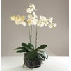 Babylon London Kunstpflanze Phalaenopsis Orchidee in Vase