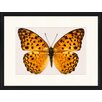 LivCorday Gerahmtes Poster Schmetterling-Serie 35, Grafikdruck