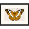LivCorday Butterfly Series 34 Framed Graphic Art