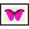 LivCorday Butterfly Series 17 Framed Graphic Art
