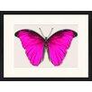 LivCorday Gerahmtes Poster Schmetterling-Serie 17, Grafikdruck