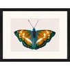 LivCorday Butterfly Series 48 Framed Graphic Art