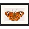 LivCorday Gerahmtes Poster Schmetterling-Serie 33, Grafikdruck