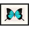 LivCorday Butterfly Series 16 Framed Graphic Art