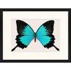 LivCorday Gerahmtes Poster Schmetterling-Serie 16, Grafikdruck