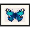LivCorday Butterfly Series 19 Framed Graphic Art