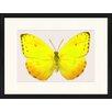 LivCorday Gerahmtes Poster Schmetterling-Serie 2, Grafikdruck