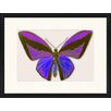 LivCorday Butterfly Series 21 Framed Graphic Art