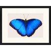 LivCorday Gerahmtes Poster Schmetterling-Serie 44, Grafikdruck