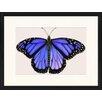 LivCorday Gerahmtes Poster Schmetterling-Serie 23, Grafikdruck