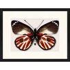 LivCorday Gerahmtes Poster Schmetterling-Serie 20, Grafikdruck