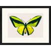 LivCorday Butterfly Series 3 Framed Graphic Art