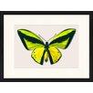 LivCorday Gerahmtes Poster Schmetterling-Serie 3, Grafikdruck