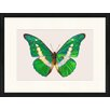 LivCorday Butterfly Series 24 Framed Graphic Art