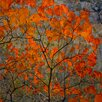 David & David Studio 'Foliage of Cotinus Roux' by Laurence David Framed Graphic Art