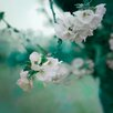 "David & David Studio Paneel ""Turquoise, Cherry 1"" von Philippe David, Fotodruck"