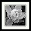"Star Creations ""Lotus I"" by Glenn Taylor Framed Photographic print"