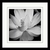 "Star Creations ""Lotus II"" by Glenn Taylor Framed Photographic Print"
