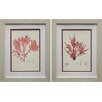 Star Creations Nature Print III & IV by Vision Studio 2 Piece Framed Graphic Art Set