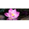 Pro-Art Water Lily Painting Print Glass Art