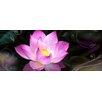 Pro-Art Glasbild Water Lily, Kunstdruck