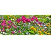 Pro-Art Glasbild Wildflower Meadow II, Kunstdruck