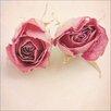 Pro-Art Glasbild Vintage Roses II, Kunstdruck