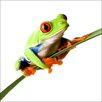 Pro-Art Glasbild Frosch, Kunstdruck