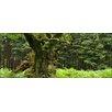 Pro-Art Glasbild Oak Tree, Kunstdruck