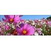 Pro-Art Glasbild Wildflower Meadow I, Kunstdruck