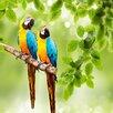 Pro-Art Glasbild Parakeet II, Kunstdruck