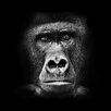 Pro-Art Glasbild Gorilla, Kunstdruck