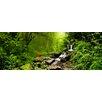 Pro-Art Glasbild Fairy Tale Forest, Kunstdruck